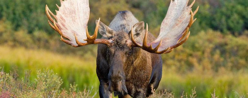 Открытии осенне-зимнего сезона охоты в 2015 году